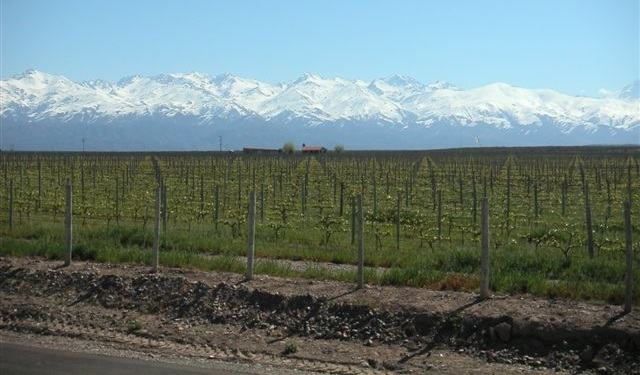 pictures of mendoza, things to do in argentina, things to see in argentina, wine in mendoza